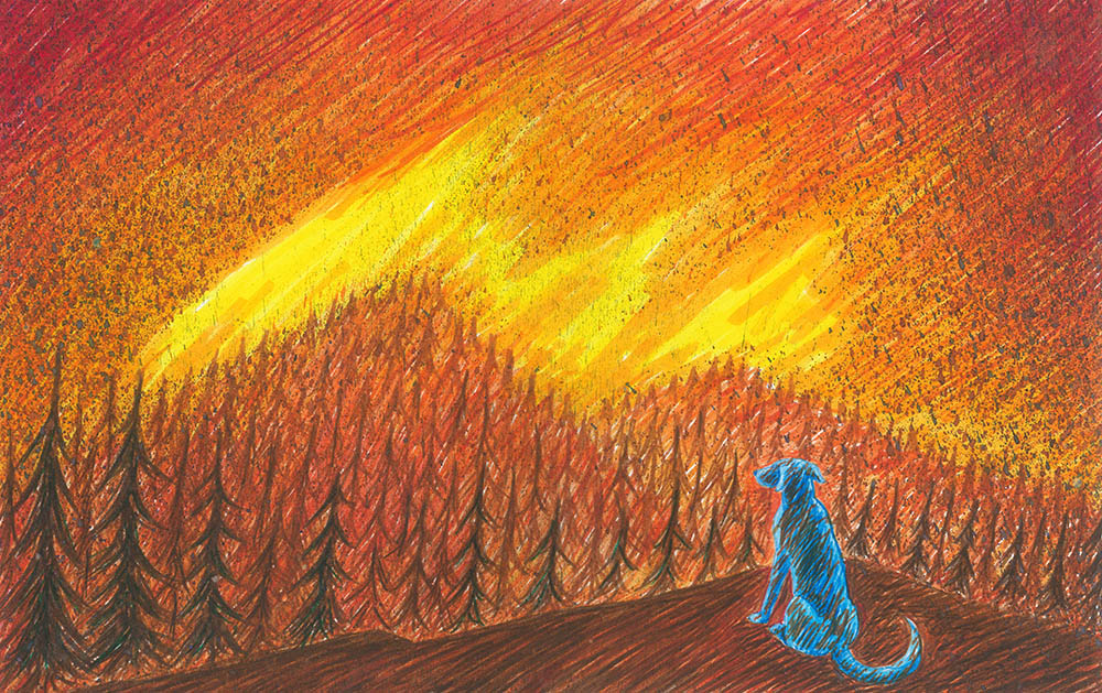Blue dog forestfire